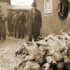 Расчеловеченные: на врачей, осуществляющих эвтаназию, экскурсия в Освенцим действует «вдохновляюще»