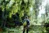 Как выжить в лесу без еды