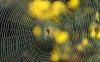 Биотехнологии, помогающие создать искусственную броню