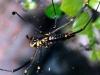 Ученые сделали скрипичные струны из паутины