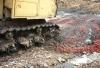 Россельхознадзор закатал в землю 12 тонн польской черешни